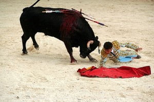 Bull 300x200 Promise of death in the afternoon keeps bullfighting alive for fans