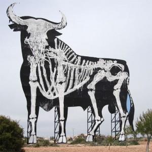 The Spanish Bull's bones.